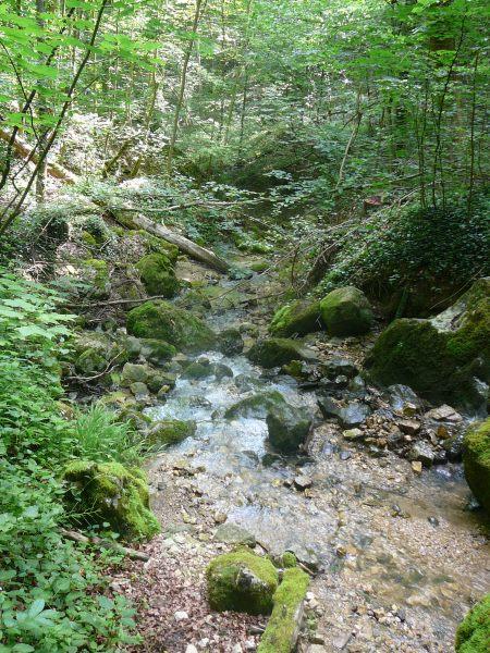 Juni 2015 Wanderung Zipfelbachschlucht 10