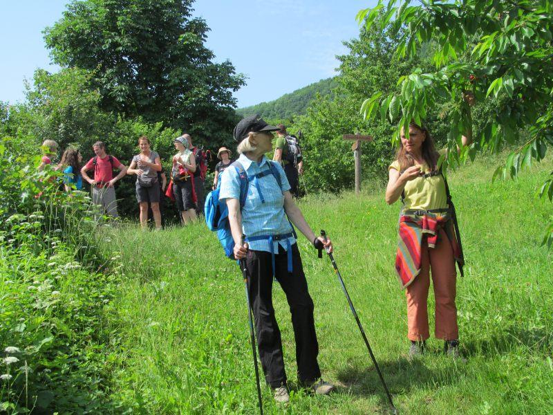 Juni 2015 Wanderung Zipfelbachschlucht 12