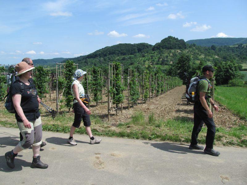 Juni 2015 Wanderung Zipfelbachschlucht 16