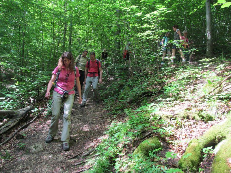 Juni 2015 Wanderung Zipfelbachschlucht 7