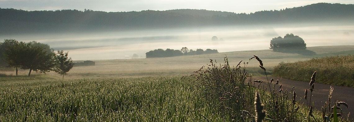 Nebel bei Undigen